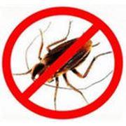 Дезинсекция (тараканы) фото
