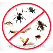 Дезинсекция (уничтожение комаров)