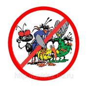 Дезинсекция. Уничтожение насекомых инсектицидными гелями (тараканов, муравьев и т.д.).