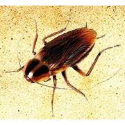 Дезинсекция (истребление насекомых) фото