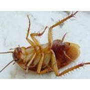 Помощь в борьбе с клопами, тараканами и т. д. фото