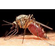 Уничтожение комаров на даче, участке Обработка от насекомых. Борьба с комарами 89170327271 фото