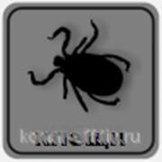 фото предложения ID 7364010