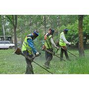Покос травы. Спил веток деревьев. Уборка территории в Ульяновске. фото