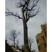 Вырубка деревьев Удалить дерево Киев Спиливание деревьев