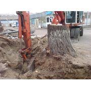 Спил и выкорчевывание деревьев