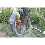 Удаление деревьев от 5000 руб/объект фото
