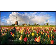 Виза в Голландию на год фото