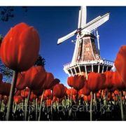 Оформление визы в Голландию фото