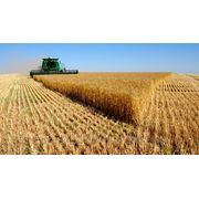 Оценка земельного участка сельхозназначения фото