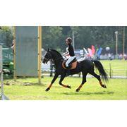 Спортивная подготовка лошадей фото