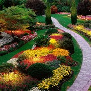 Подбор растений для сада, Киев, Украина фото