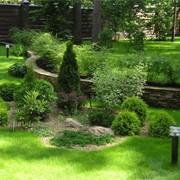 Ландшафтный дизайн, благоустройство территории, озеленение, создание водоёмов, малых архитектурных форм, альпинариев, строительство подпорных стен, мощение дорожек, посев, укладка газона, системы автоматического полива, установка автополива, освещения сад фото