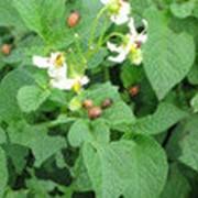 Органическое удобрение Биозуфр фото