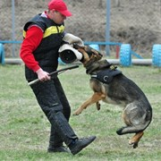 Опытный кинолог. Дрессировка собак в Иркутске. фото