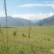 Участок 0,75 Га ЛПХ в Чемальском районе Республики Алтай, село Чемал Плато Барантал фото