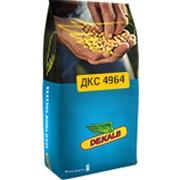 Насіння кукурудзи Монсанто DKC4964 укр., міш