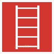 Пожарный знак «Пожарная лестница» фото