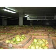 Каркасные овощехранилища фото
