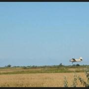Авиационно-химические работы в Украине, Запорожье Авиакомпания Агроавиа, ООО Расселение трихограммы, подкормка и рассев минеральных удобрений, борьба с сорняками, болезнями по рисовым чекам с нормой рабочего раствора от 70 до 400 л/га фото