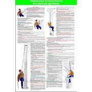 Стенд по охране труда «Правила безопасности при обрезке деревьев» фото