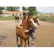 Прогули на лошадях фото
