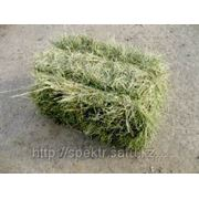 Сено суданской травы тюкованное фото