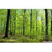 Проект освоения лесов фото