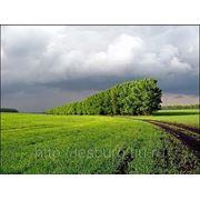 Проект освоения лесов для ведения сельского хозяйства (разработка)