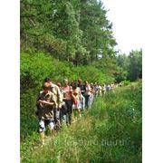 Проект освоения лесов для осуществление научно-исследовательской деятельности (разработка) фото
