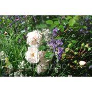 КУРСЫ «Садовник частного участка» фото