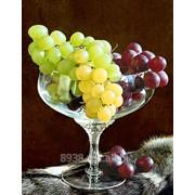 Виноград культурный фото