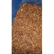 Миндаль Золотой Golden Almond фото