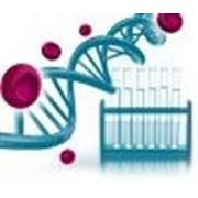 Анализ на вирус папилломы человека (генотипирование)