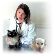Ветеринарные услуги на дом фото