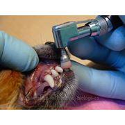 Профессиональная чистка зубов у собак и кошек ультразвуком фото