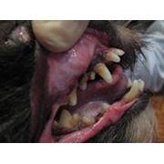 Удаление зубного камня, механическое фото