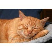 Кастрация кота на дому фото