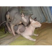 Стерилизация кошки без проблем. фото