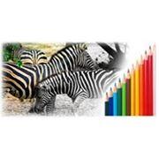 Цветная печать визиток, листовок, флаеров, буклетов, каталогов, проспектов фото