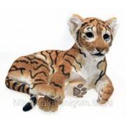 Детеныш тигра фото