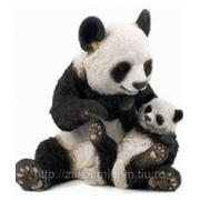 Панда с малышом фото