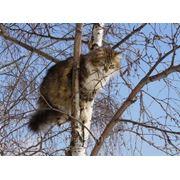 Снятие кошек с деревьев фото