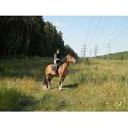 Верховые прогулки на лошадях фото