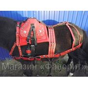 Парадная сбруя для лошади (пони/ослика) фото