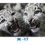 Тигрята фото