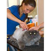 Стрижка котов и кошек (ВИЗ) фото