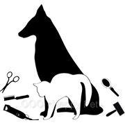 Расценки на стрижку собак и кошек