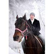 Жених на белом коне фото