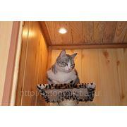 Гостиница для кошек фото